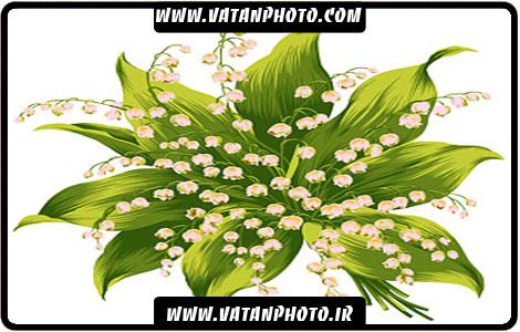 طرح بسیار زیبا و جذاب از گل سبز+psd