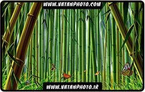 طرح گرافیکی و کارتونی از جنگل نی کاملا لایه باز+ psd