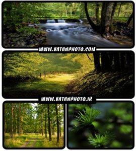 عکس های با کیفیت از جنگل های سرسبز با کیفیت بالا+ HD