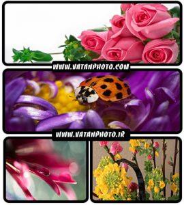 عکس های با کیفیت از انواع گل های گوناگون+ HD