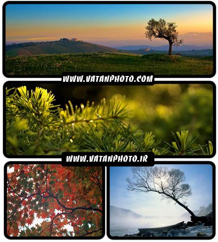 عکس های زیبا و با کیفیت از طبیعت در سایز HD