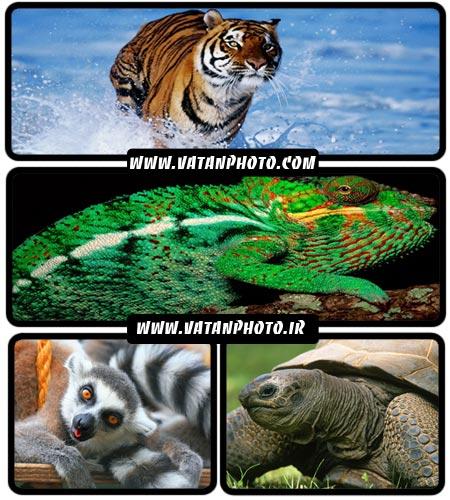 عکس های بسیار جذاب از انواع حیوانات با کیفیت بالا