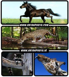 مجموعه عکس های با کیفیت از حیوانات