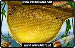 طرح گرافیکی از کندو و زنبور عسل کاملا لایه باز+ psd