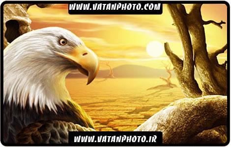 طرح گرافیکی از نمای نزدیک عقاب در بیابان کاملا لایه باز+ psd