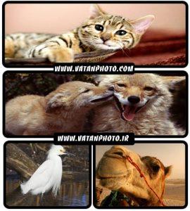 مجموعه عکس های فوق العاده با کیفیت از حیوانات+ HD