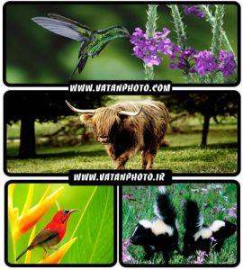 عکس های با کیفیت از انواع حیوانات با کیفیت بالا+ HD