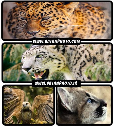 عکس های با کیفیت از حیوان های وحشی با کیفیت بالا+ HD