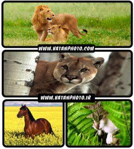 مجموعه عکس های جذاب و با کیفیت از حیوانات