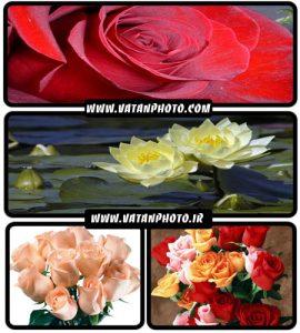 مجموعه عکس های فوق العاده جذاب از انواع گل