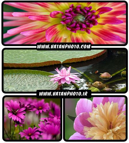 مجموعه عکس های جذاب از گل های رنگارنگ در سایز HD
