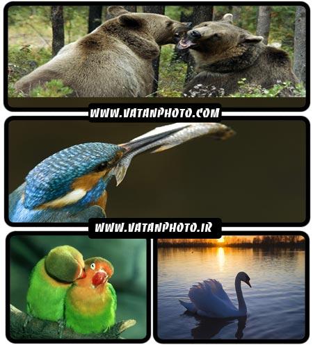 مجموعه فوق العاده از عکس های حیوانات در سایز HD