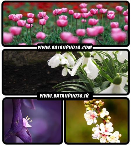 مجموعه عکس های بسیار جذاب از انواع گل+ HD