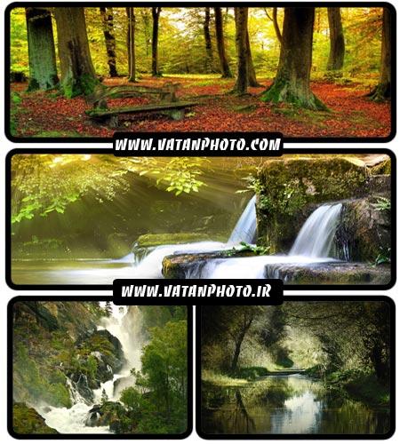 عکس های فوق العاده خیره کننده از جنگل های سرسبز+ HD