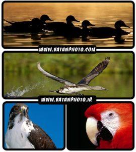 عکس های جذاب از پرندگان و حیوانات با کیفیت بالا+ wallpaper