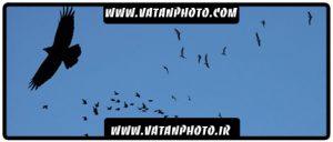 براش پرندگان در حالت های گوناگون پرواز