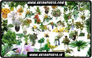 مجموعه آیکن از گل ها و دسته گل های