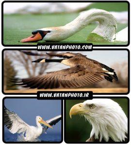عکس های جذاب از پرندگان با کیفیت بالا+ wallpaper