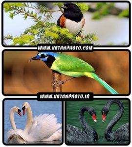 عکس های با کیفیت از پرندگان+ wallpaper