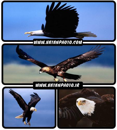 عکس از انواع حیوانات و پرندگان با کیفیت بالا+ wallpaper