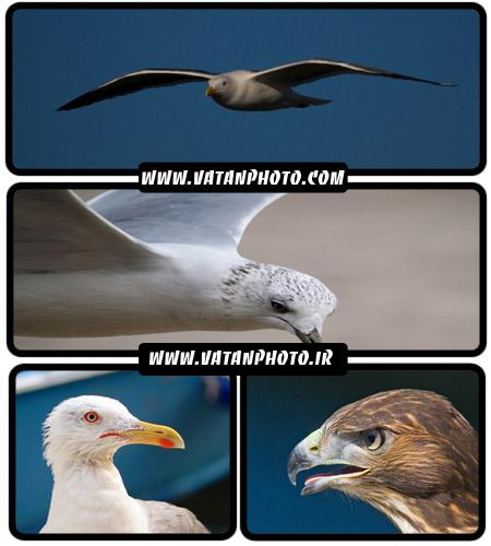 عکس های فوق العاده با کیفیت از پرندگان+ wallpaper