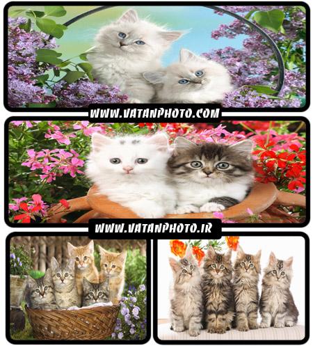 عکس های فوق العاده بامزه از گربه های زیبا+ wallpaper