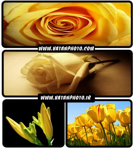 عکس های بسیار جذاب از گل های زرد با کیفیت بالا+ wallpaper