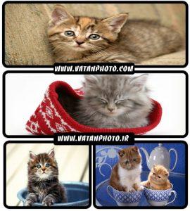 عکس های فانتزی و خنده دار از گربه+wallpaper