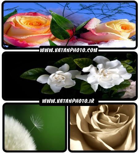 عکس های فوق العاده زیبا از گل های گوناگون+ wallpaper