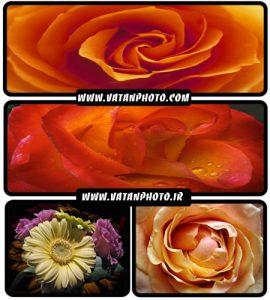 عکس های با کیفیت از گل های رز در رنگ های گوناگون+ wallpaper