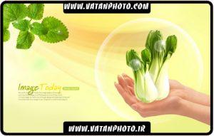 طرح تبلیغاتی فروشگاه های سبزیجات
