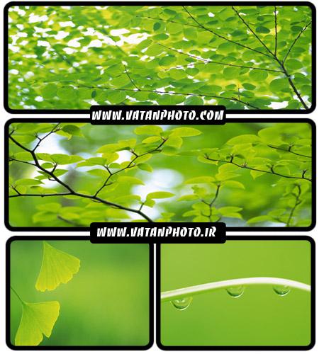 عکس های بسیار با کیفیت از برگ های سر سبز+ wallpaper