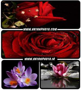 عکس های فوق العاده جذاب از گل های رز و...+ wallpaper