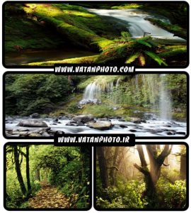 20 عکس با کیفیت از طبیعت سر سبز+ wallpaper HD