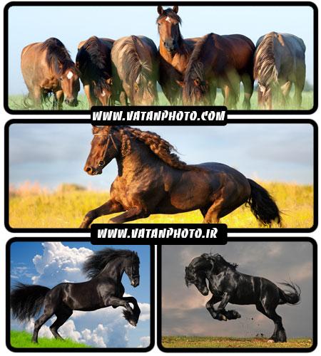 تصاویر زیبا از اسب - شاتر استوک