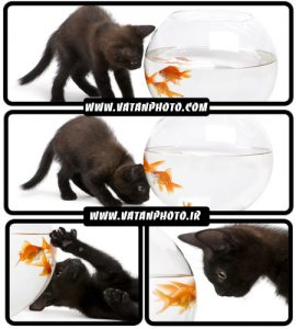 تصاویر گربه مشکی پشت آکواریوم - شاتر استوک