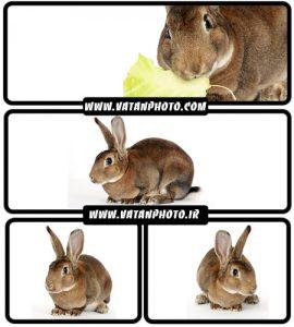 تصاویر خرگوش قهوه ای - شاتر استوک