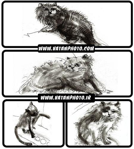 تصاویر طراحی گربه - شاتر استوک