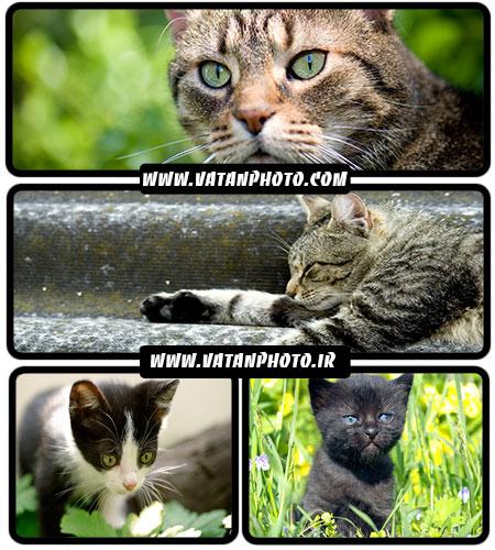 تصاویر گربه - شاتر استوک