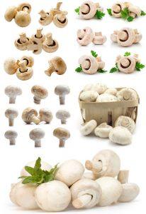 مجموعه تصاویر قارچ دکمه ای - شاتر استوک