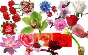 مجموعه آیکن گل واقعی