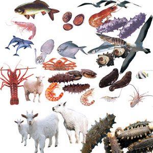 مجموعه آیکن حیوانات واقعی