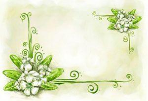 بکگراند و کارت پستال گل