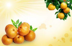 بکگراند آماده کارت ویزیت میوه فروشی