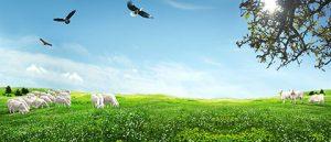 طرح طبیعت و گوسفند فانتزی