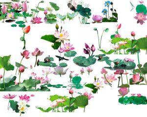 مجموعه آیکن گل مرداب