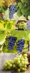 مجموعه 5 عکس انگور سبز و سیاه 7000x4660