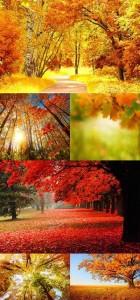 عکس جنگل پاییزی در سایز 7274x4800
