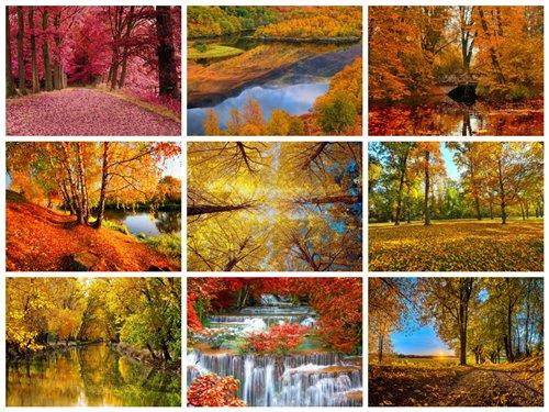50 عکس بسیار با کیفیت جنگل پاییزی 2560x1600