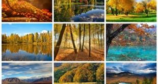 مجموعه تصاویر و عکس جنگل پاییزی 1920x1200